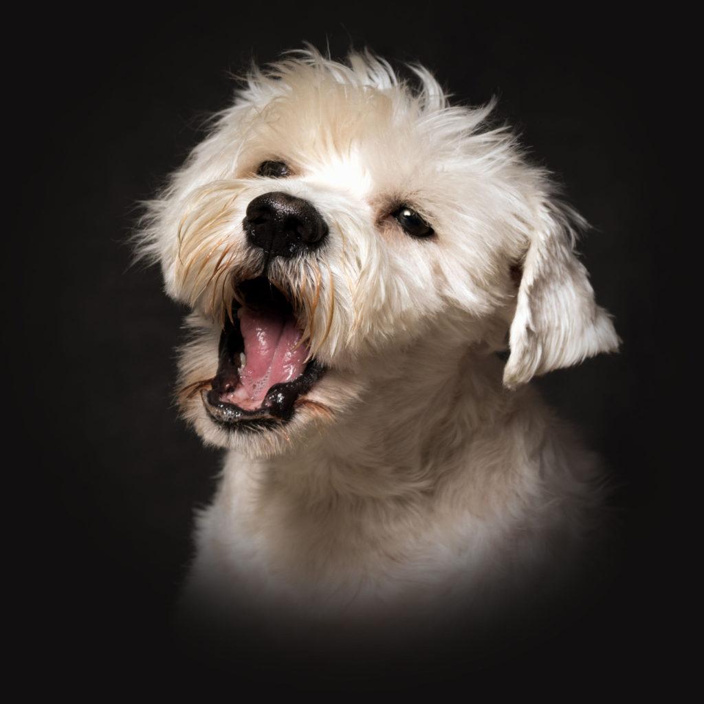 Mon chien aboie