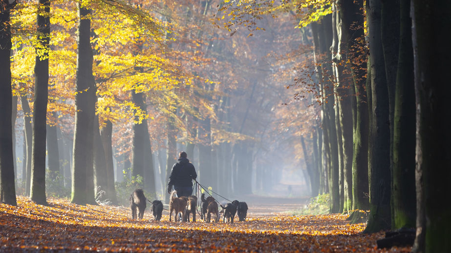 Garde de chiens Paris