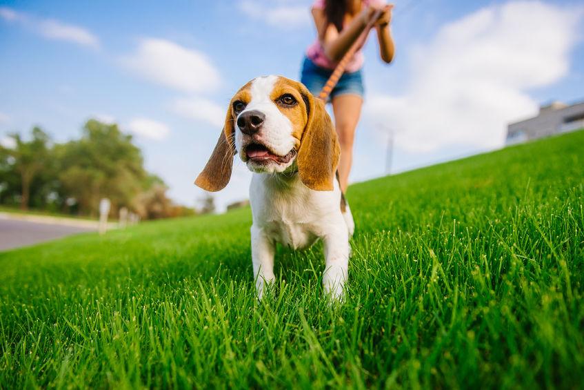 Promenade de chien dans le jardin