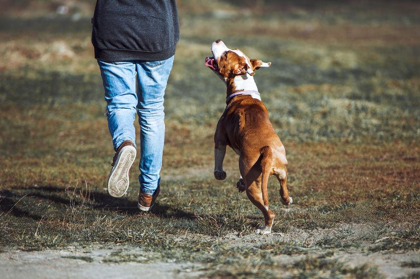 Promeande de chien Wouf Wouf. Chien sans laisse