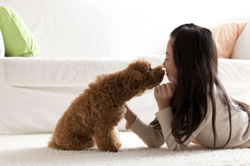 Caniche avec enfant