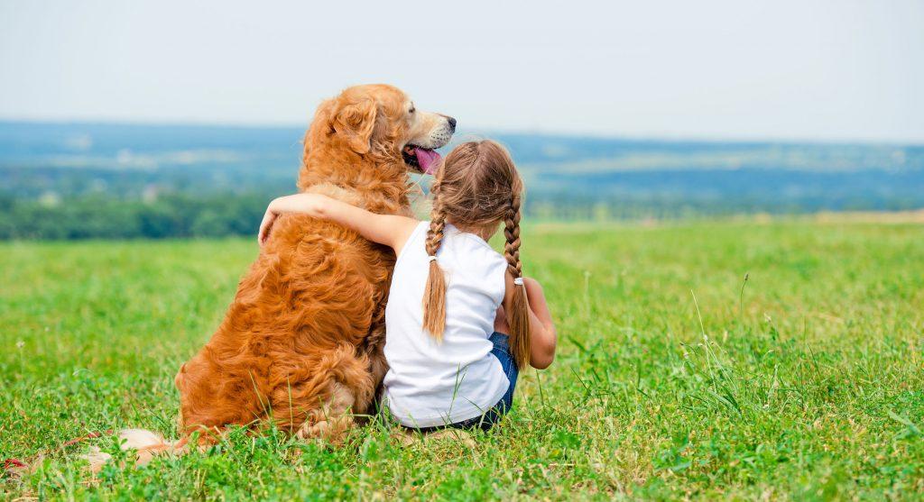 golden retriever avec un enfant