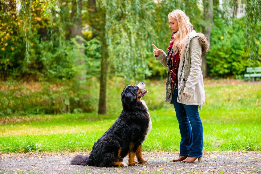 apprendre à son chien avec Wouf Wouf