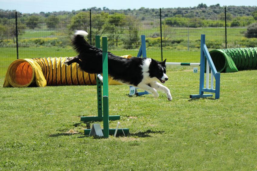 Activité du chien