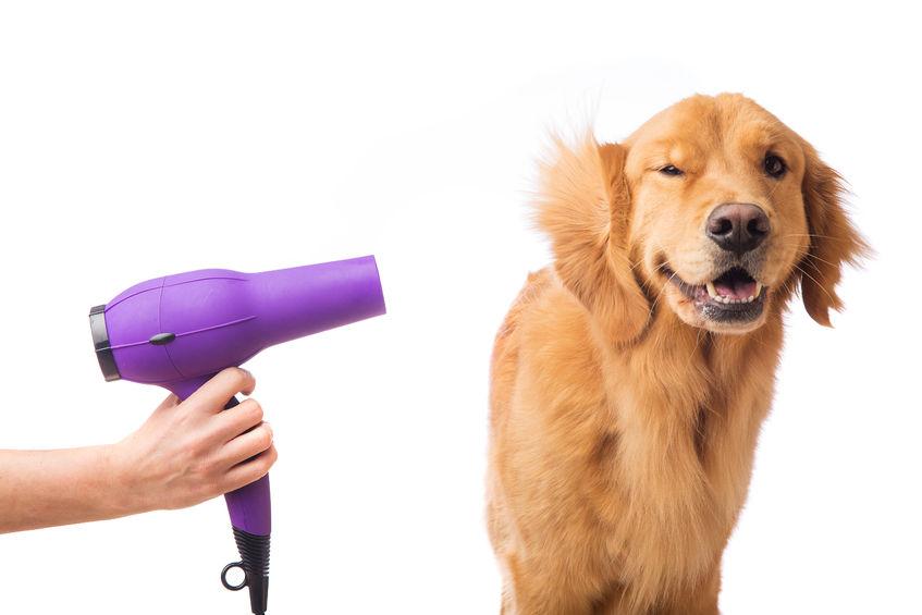 Bain chien
