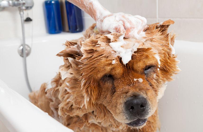 s'occuper du toilettage de son chien avec Wouf Wouf