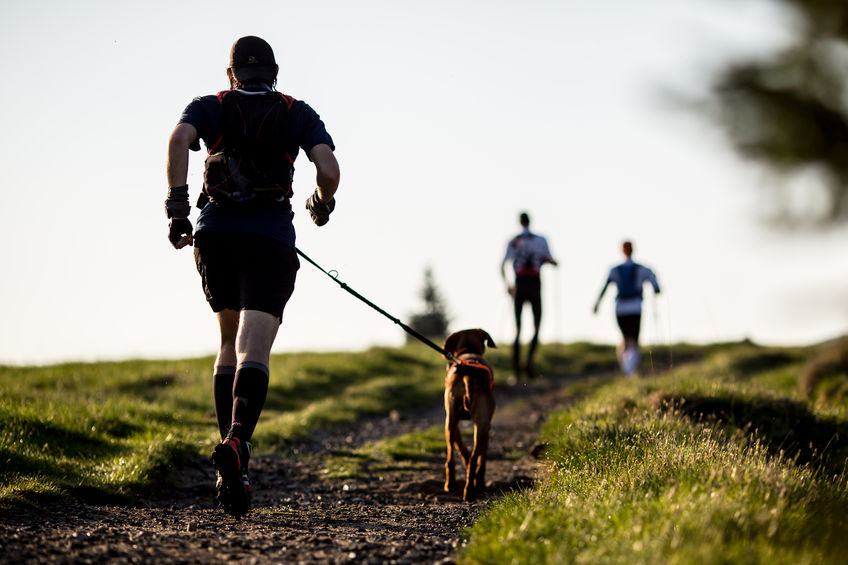 Activité du chien le treking