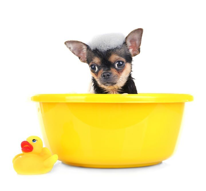 Bain chien shampoing