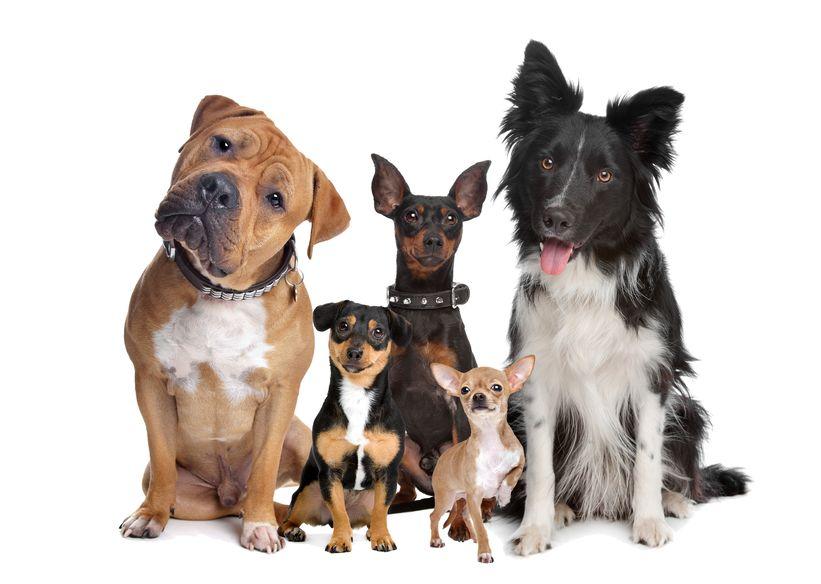 Socialiser son chien avec d'autres chiens