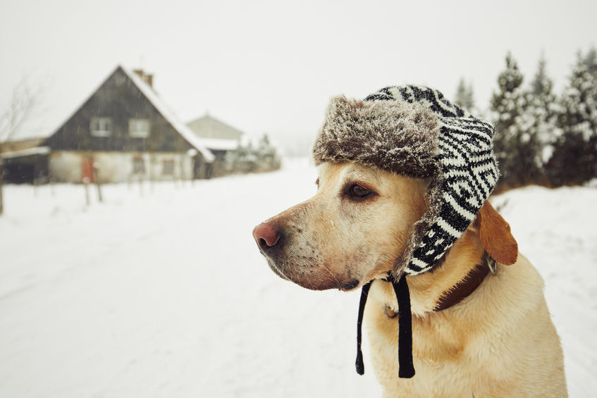 Chien hiver froid Wouf Wouf