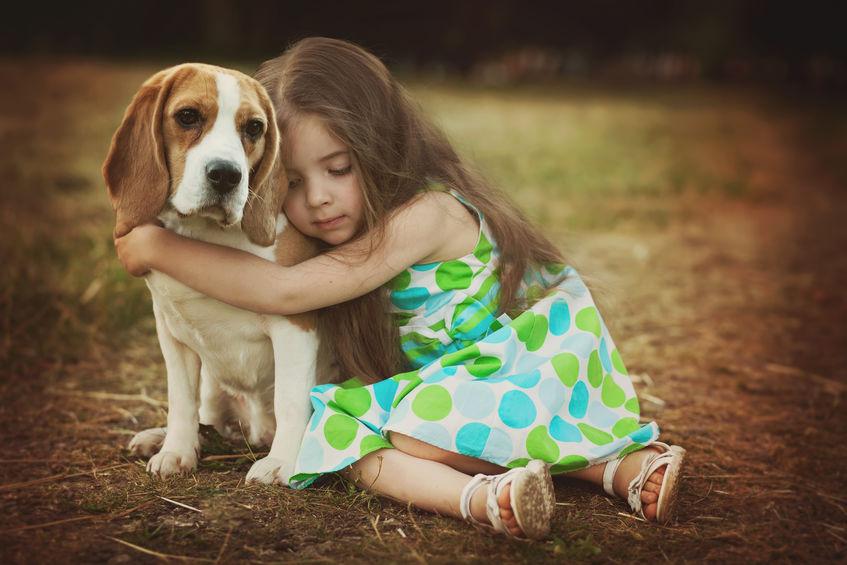 Beagle avec petite fille