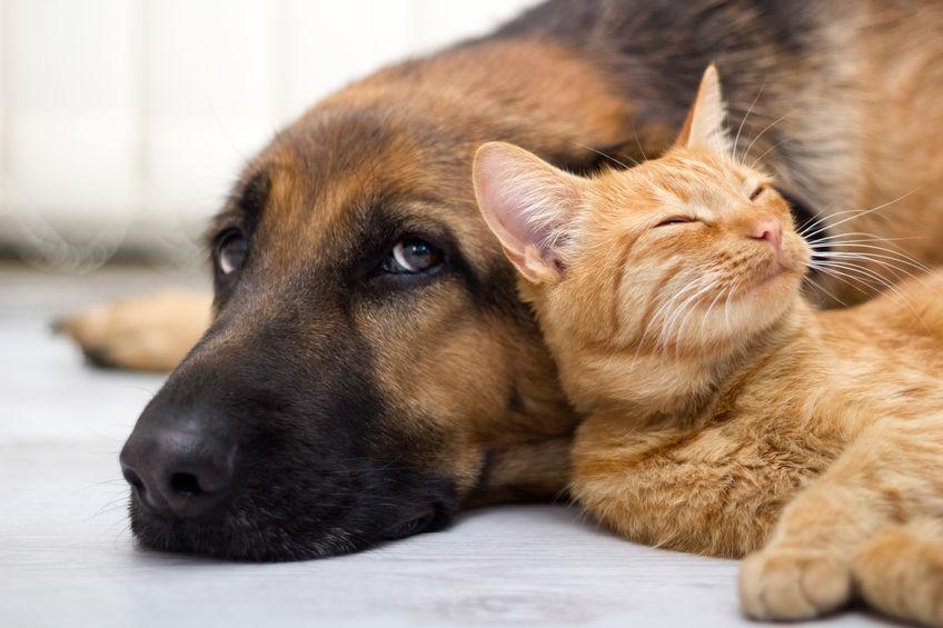 Chien avec un chat
