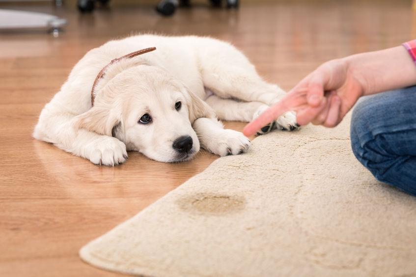 Propreté du chien punition