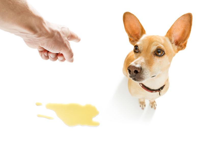 propreté du chien