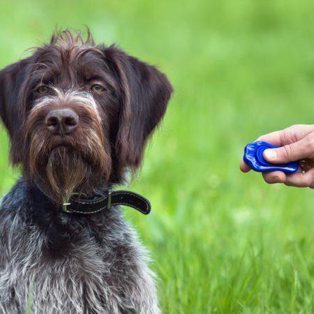 Clicker training pour chien