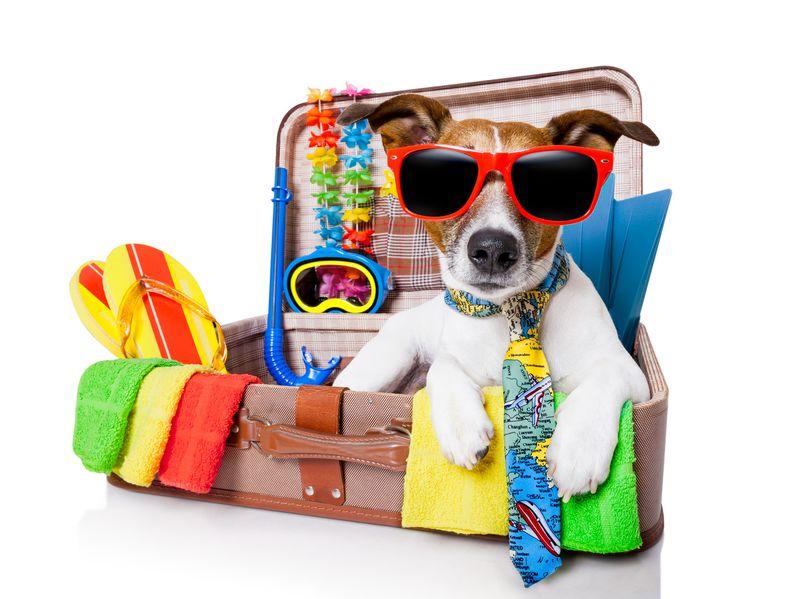 Vacances avec mon chien