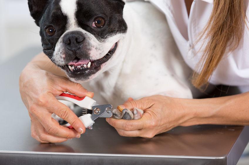 Soins du chien : Les griffes