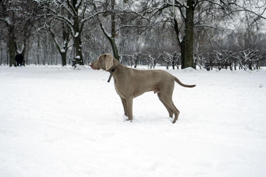 Weimar à la neige