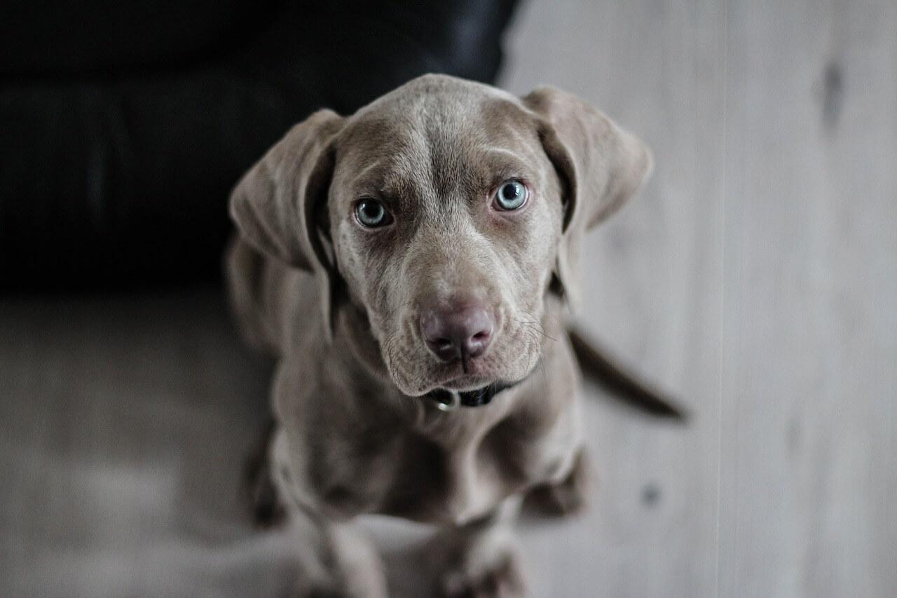 contraintes de la vie avec un chien, l'occcupatio,