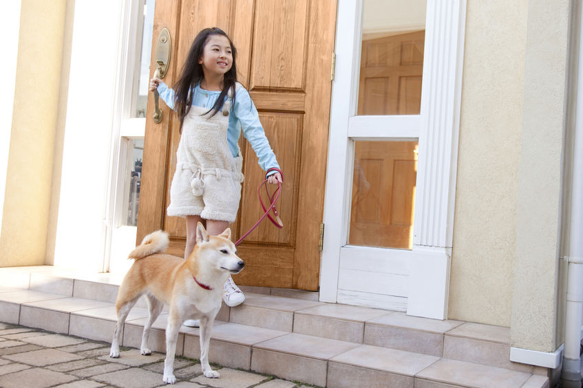 Shiba Inu avec enfant