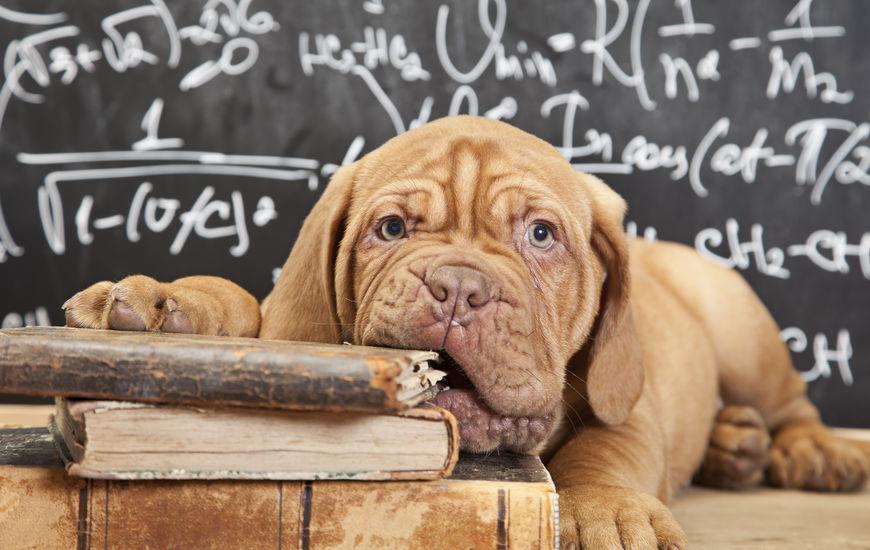 Apprendre la solitude au chien : les étapes clefs
