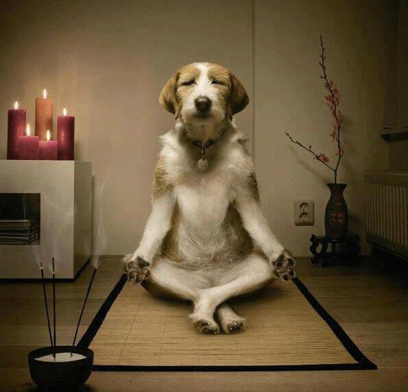 Chien qui fait du yoga