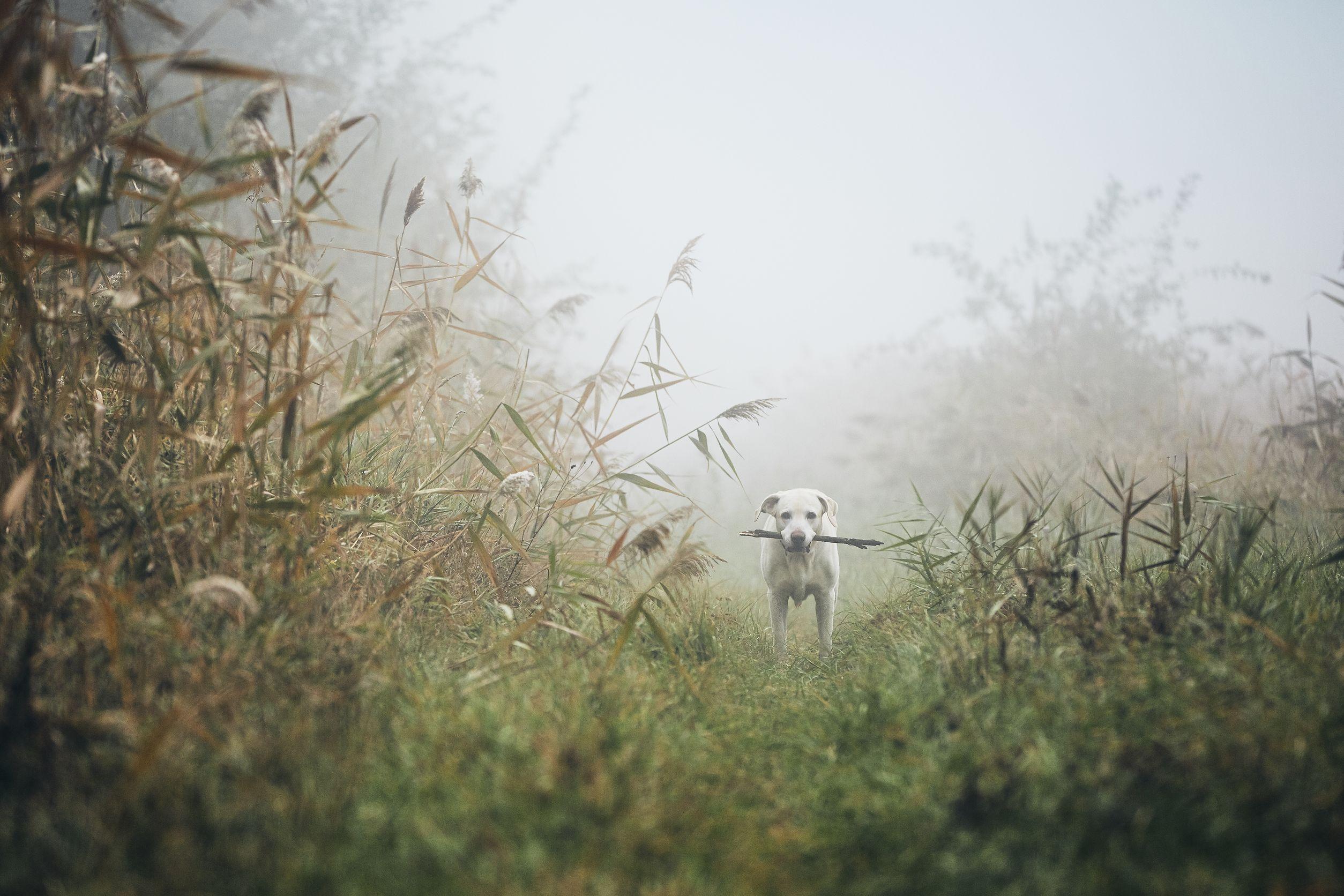 chien perdu dans les bois
