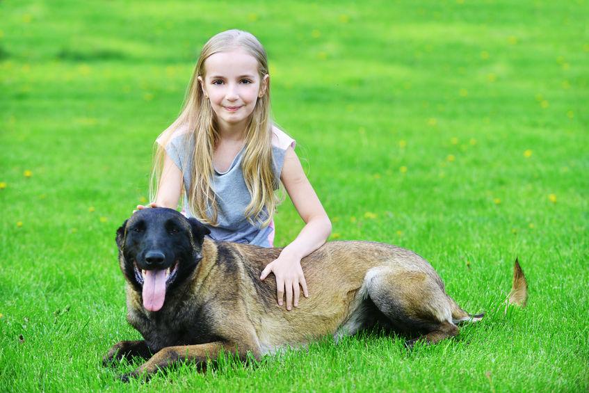 chien Malinois avec enfant