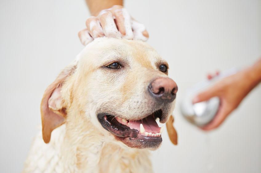 Toilettage pour chien, dans la salle de bain