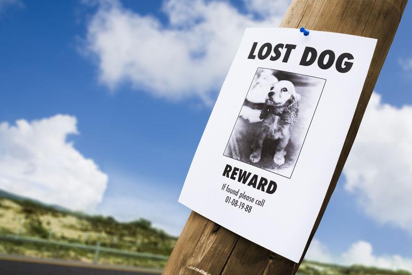 Affiche chien perdu