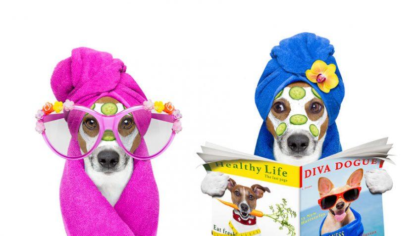 Toiletteur pour chien: un expert « beauté et hygiène »