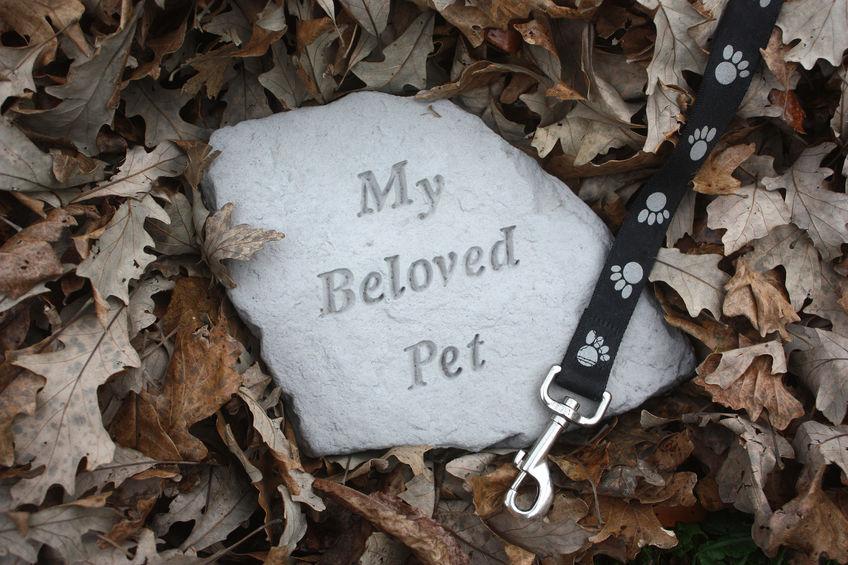 Mort de son chien