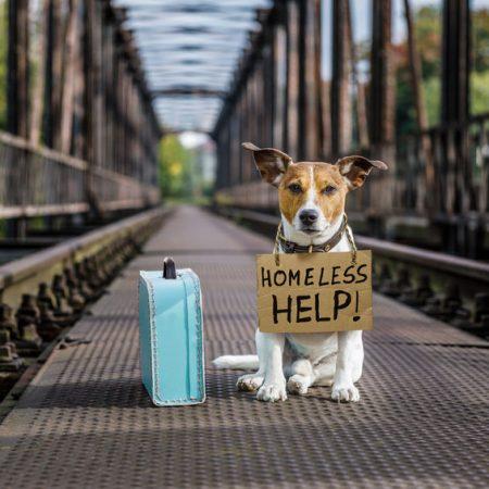 chien perdu avec pancarte