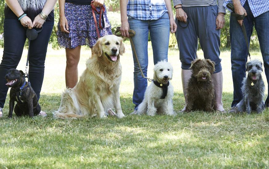 éducation de chiens en groupe