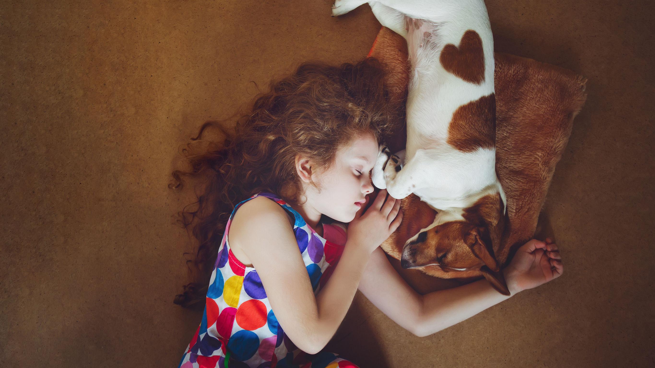 Jack Russel dormant avec une enfant