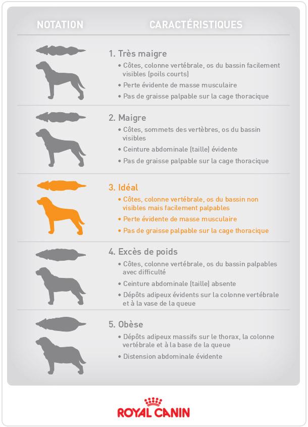 Le poids du chien : echelle de mesure