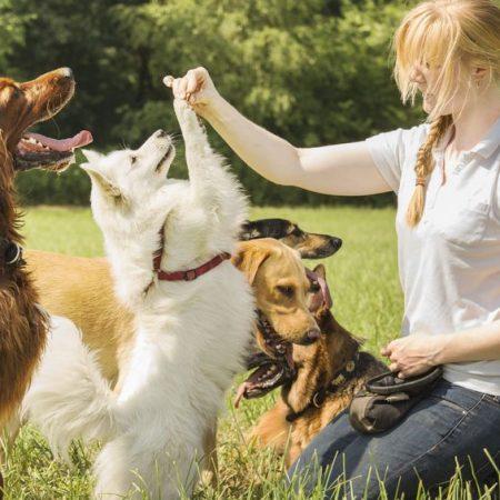 Vivre avec plusieurs chiens