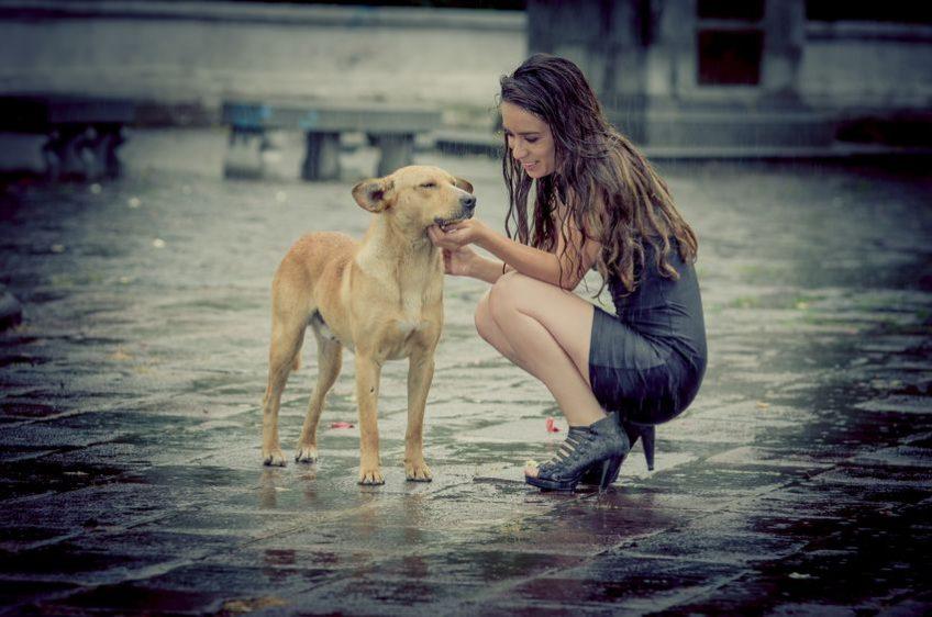 Réussir à gérer son chien pendant la saison des orages