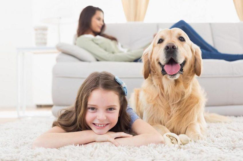 Faire héberger son chien chez des amis