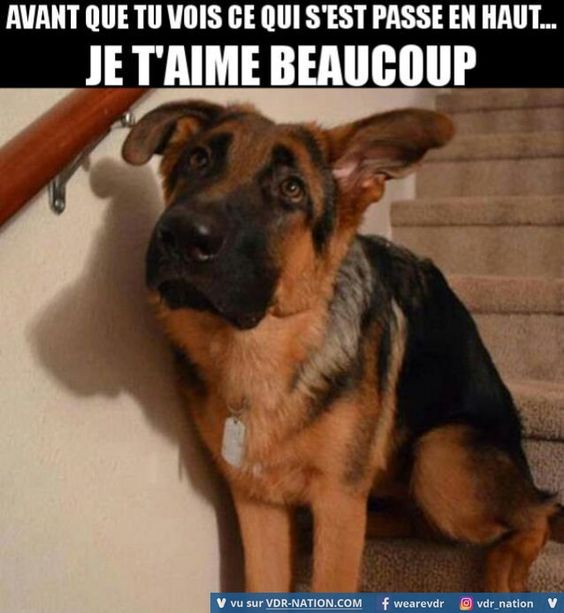 Chien coupable sur Wouf Wouf