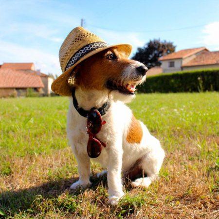 Proteger son chien du jardin