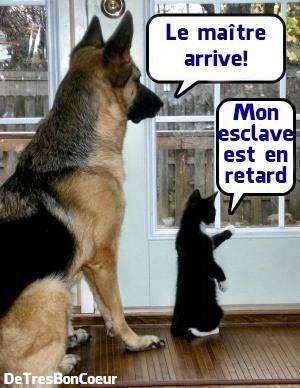 L'attente du maitre par un chien et un chat