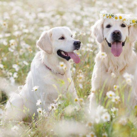 chien au printemps avec WOuf Wouf