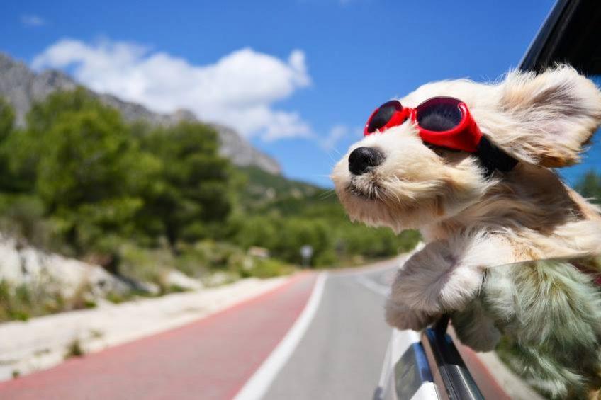 Comment faire garder votre chien durant vos vacances ? Wouf Wouf est là pour vous simplifier la vie
