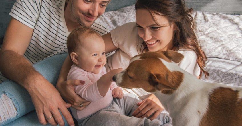 Le chien et l'arrivée d'un bébé