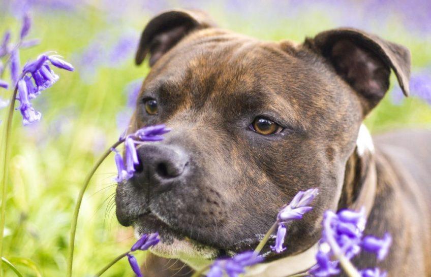 les dangers du printemps pour le chien