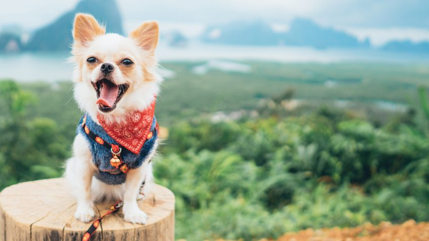 Wouf wouf : gérer un chien à fort caractère