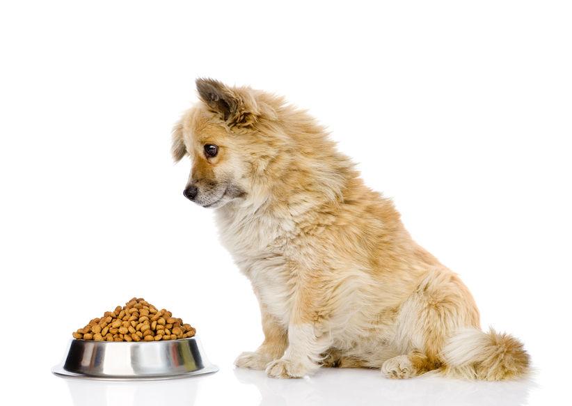 Nombre de repas par jour pour un chien