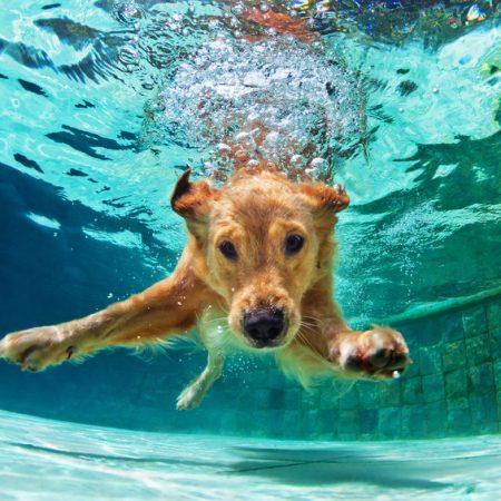 Wouf wouf : occuper son chien avec des jeux d'eau durant les fortes chaleurs