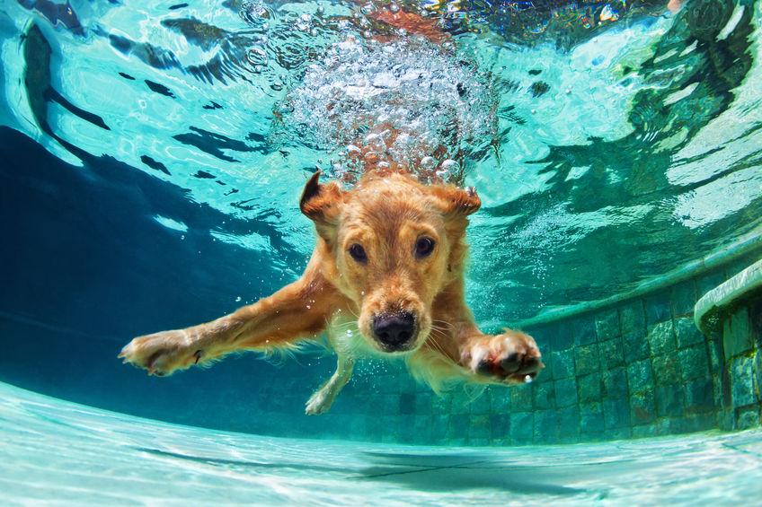 Chuen se rafraichissant dans la piscine